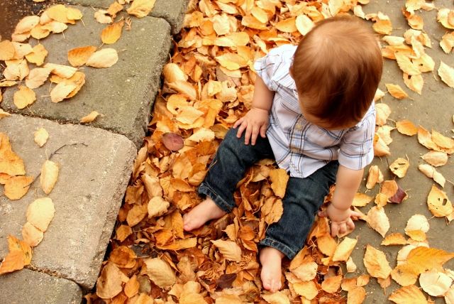 Everett in the leaves
